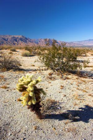 Panorama view of North American desert photo