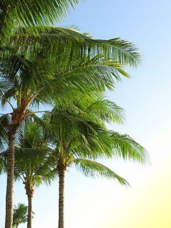 Palm photo