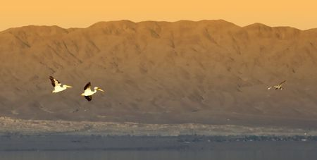 Photo of pelicans flying over Salten Sea (Southern California) photo