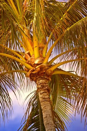 Photo of palms in tropical settings Stock Photo - 774990