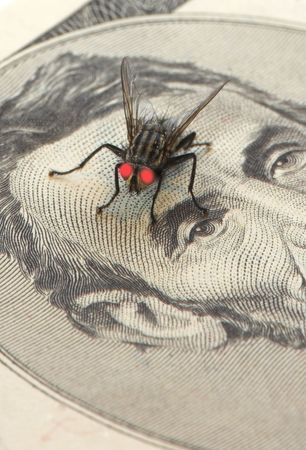 Macro of fly on a bill photo