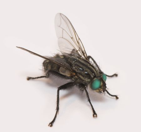 Super-macro of fly with green eyes photo