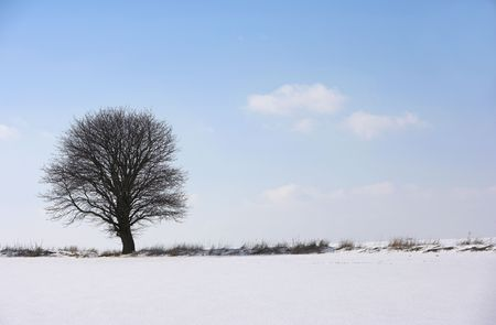Lonely tree photo