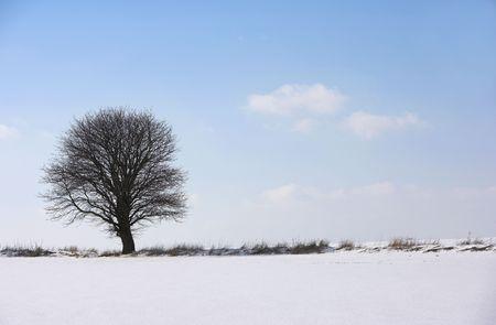 Lonely tree Stock Photo - 774803