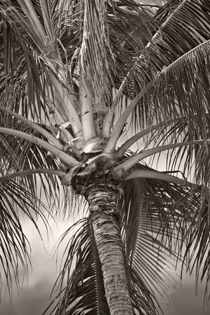 Photo of palms in tropical settings Stock Photo - 775602