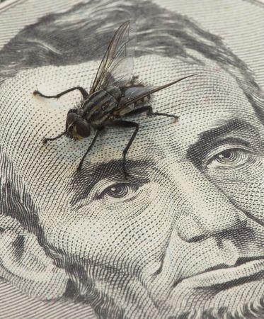 Money fly photo