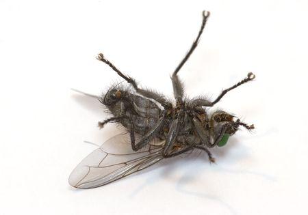 exasperation: Sleeping fly Stock Photo