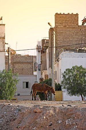 krottenwijk: Redactioneel: Foto van de stedelijke sloppenwijken in Palestina Stockfoto