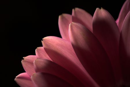 Macro photo of beautiful flower (very useful as background and icon photo) photo