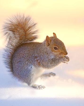 Squirrel in Central Park, Manhatten, New York Stock Photo - 874408