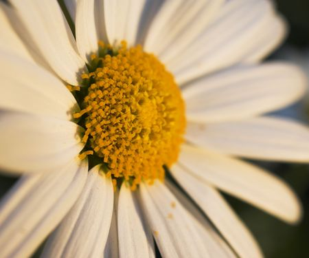 A photo of yellow flower a summer day Stock Photo - 1349305