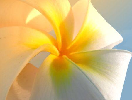 yelllow: Tropical flower Stock Photo