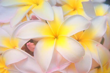 A photo of Hawaiian tree flowers Stock Photo - 1356157