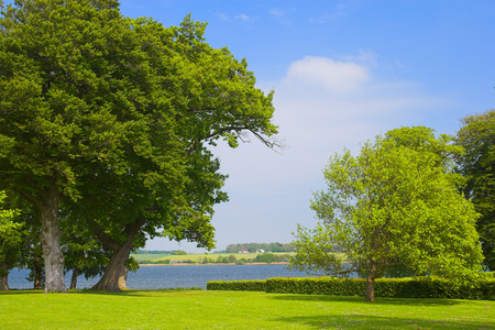 A photo of huge trees in a Danish park by the sea Stock Photo - 1497648
