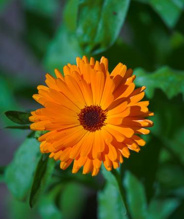 A close up photo of a beautiful orange flower