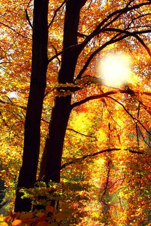A photo of sunset in the forest in autumn photo