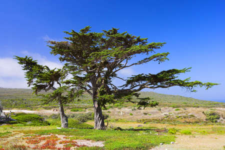 A photo of a tree in the African savanna photo