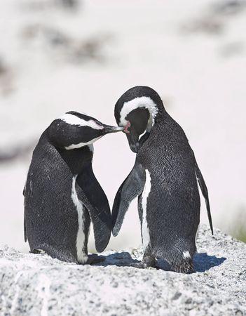 A photo of loving penguins photo
