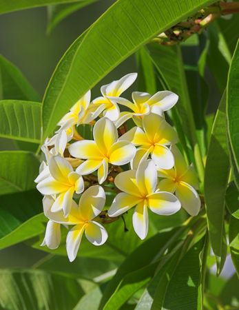A photo of beautiful Hawaiian flowers on a sunny day photo
