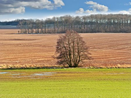 A panorama photo of forest and farmland in early spring photo