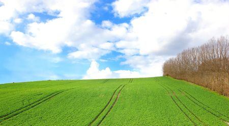 Green field and trees with blue sky and clouds  in early spring Stock Photo - 3113209