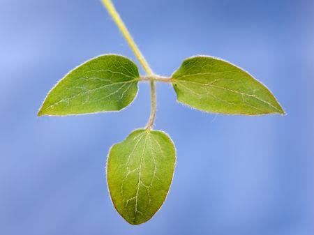 A macro photo of leaves Stock Photo - 4067498