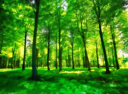Sunlight in a green and lush forest photo