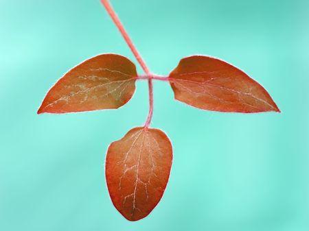A macro photo of autumn leaves Stock Photo - 4067468