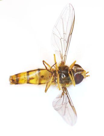 A macro photo of an imitation bee photo