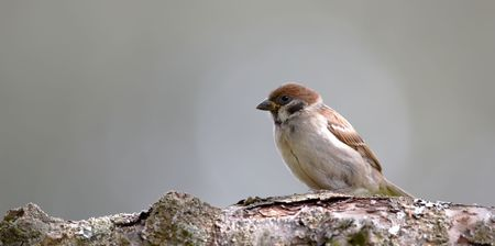 A telephoto of a charming sparrow photo