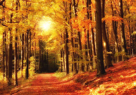 autumn scene: The forest in autumn - colorful Stock Photo