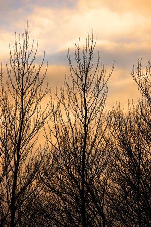 Autumn or early winter sunset - tree Stock Photo - 5143679