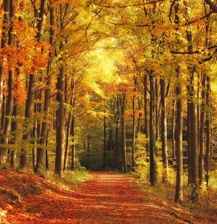 The forest in autumn - colorful photo