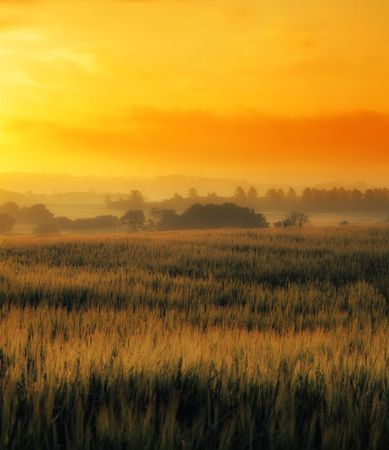 flourishing: Early morning in the countryside - Denmark Stock Photo