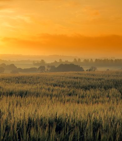 Early morning in the countryside - Denmark Stock Photo - 5208297