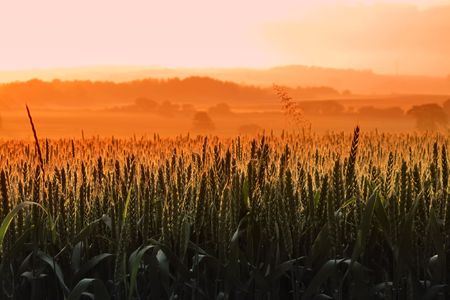 Early morning in the countryside - Denmark Stock Photo - 5417184