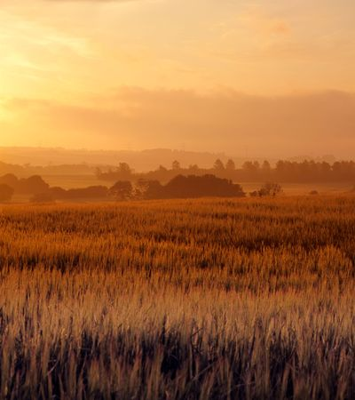 Early morning in the countryside - Denmark Stock Photo - 5417225