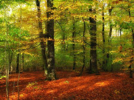 Las jesienią - kolorowe Zdjęcie Seryjne - 5498377