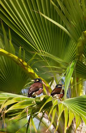 Tropical palms - useful as background photo