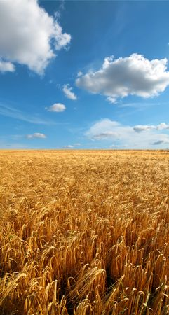 Before harvest - landscape photo from the countryside Stock Photo - 5591064