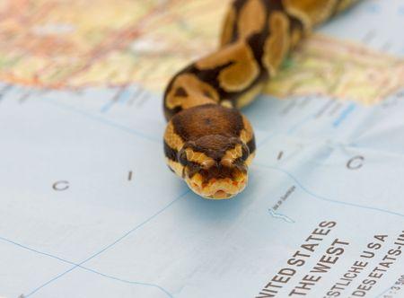 Snake invasion - symbolic content photo