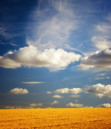 Before harvest - landscape photo from the countryside Stock Photo - 5591017