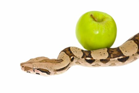 Snake in Heaven - green apple and white background photo