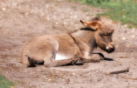 farmlife: Baby donkey sleeping