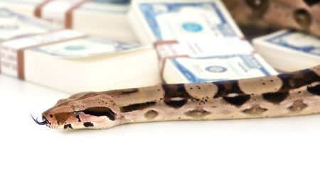 Money and snake photo