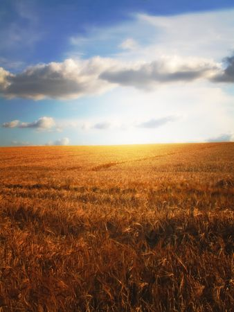 blu sky: Farmland - sunset, blu sky, and harvest Stock Photo
