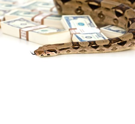 Money snake - danger and wealth photo