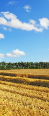 Before harvest - landscape photo from the countryside Stock Photo - 5606935