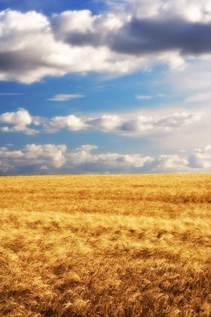 Before harvest - landscape photo from the countryside Stock Photo - 6334965