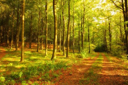 Autumn forest in all its warm colors photo